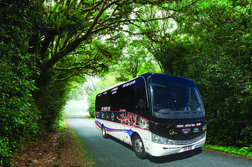 Cairns City to Port Douglas One Way Shuttle