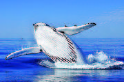 Whale Watching - AM cruise
